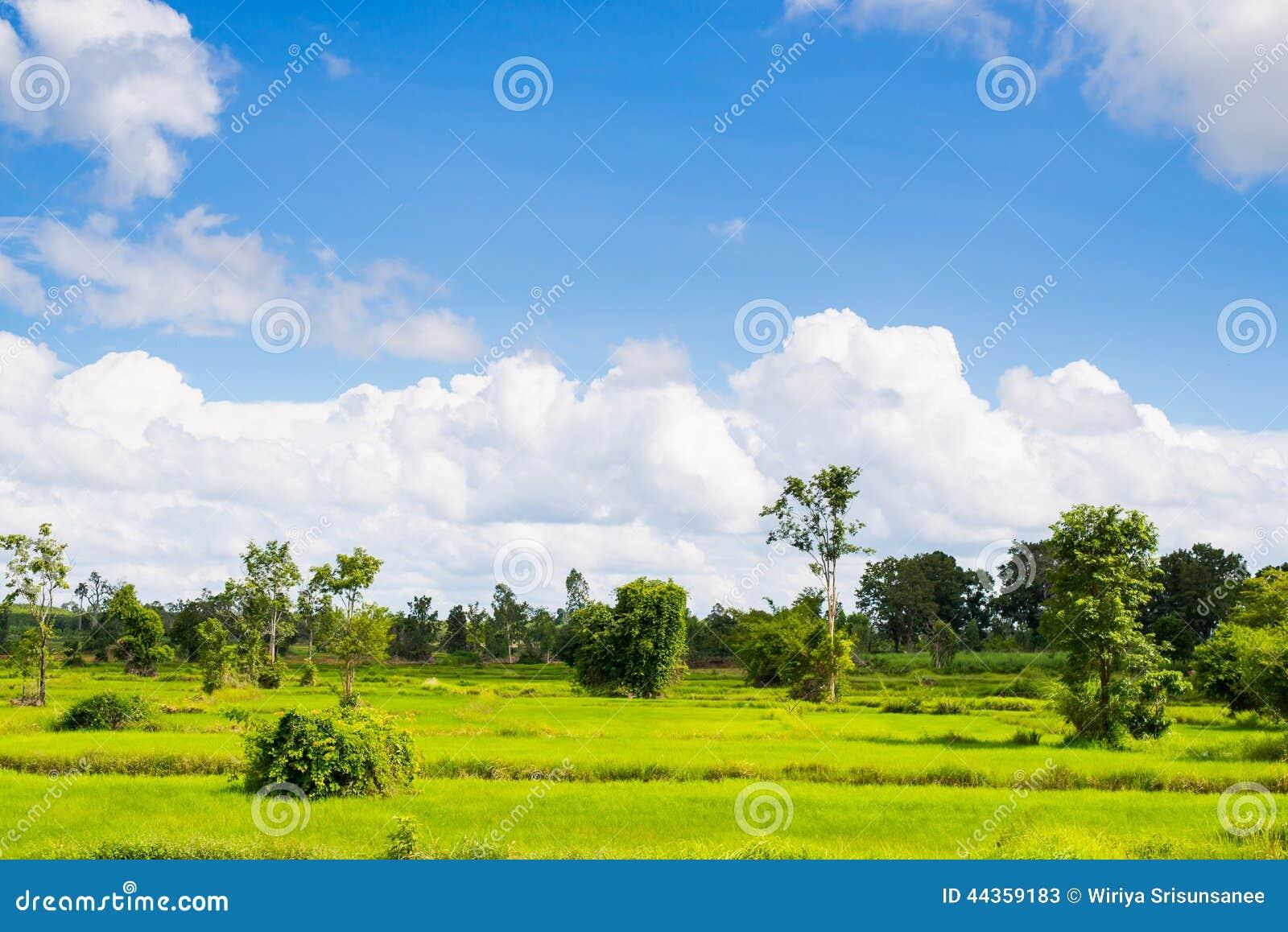 Paesaggio nuvoloso della nuvola del cielo blu dell erba verde del giacimento del riso