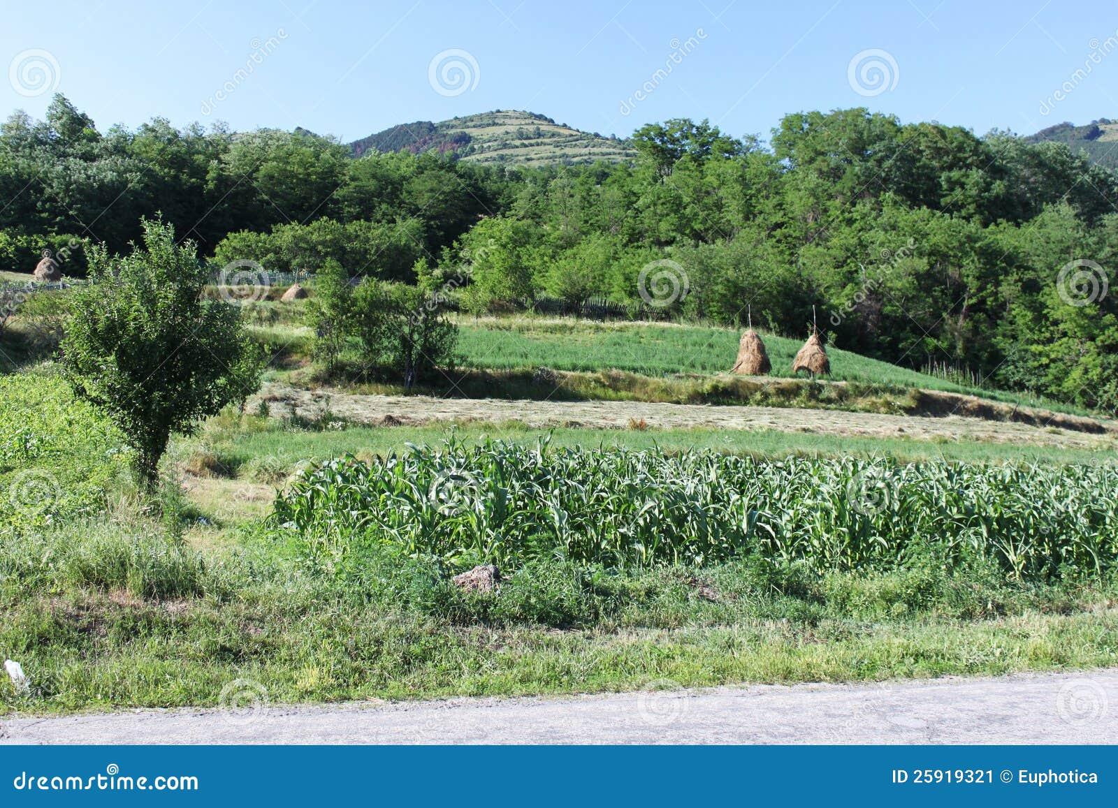 Paesaggio rurale del pendio di collina immagine stock for Planimetrie del paese di collina