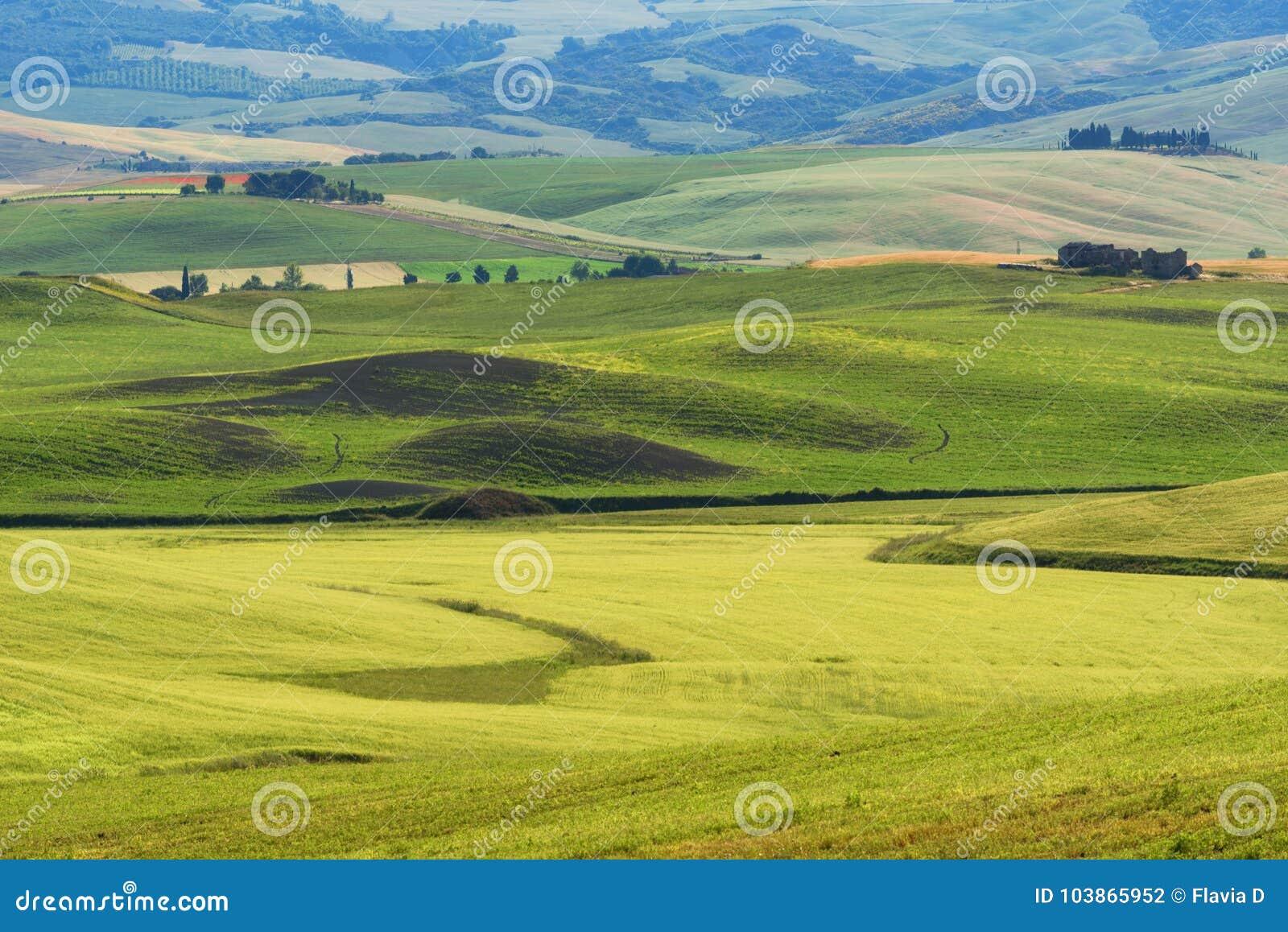 Paesaggio rurale della molla magnifica Vista sbalorditiva delle colline toscane dell onda verde, della luce solare stupefacente,