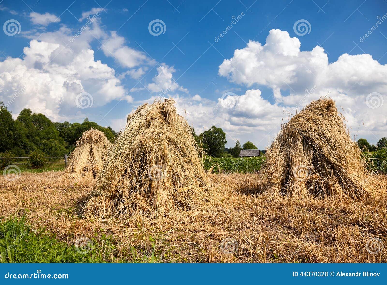 Paesaggio rurale di estate