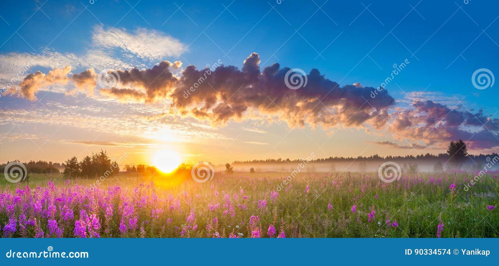 Paesaggio rurale di panorama con alba ed il prato sbocciante