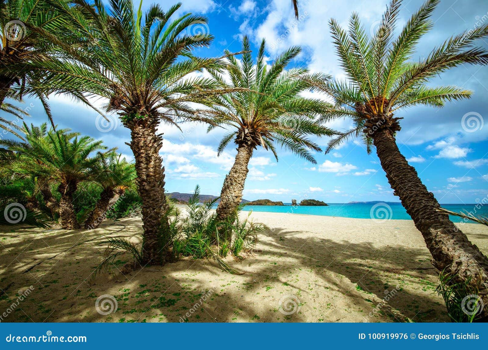 Paesaggio scenico delle palme, dell acqua del turchese e della spiaggia tropicale, Vai, Creta
