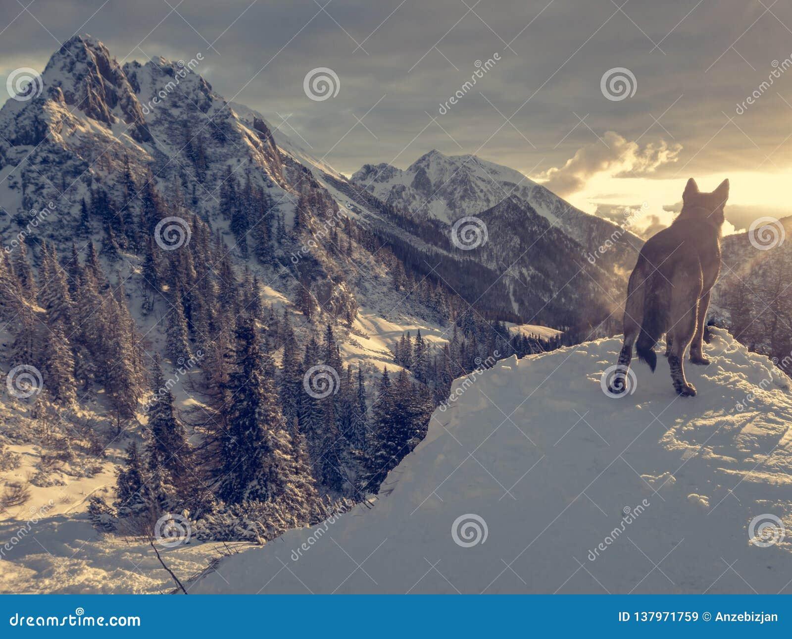 Paesaggio spettacolare della montagna di inverno illuminato dal tramonto
