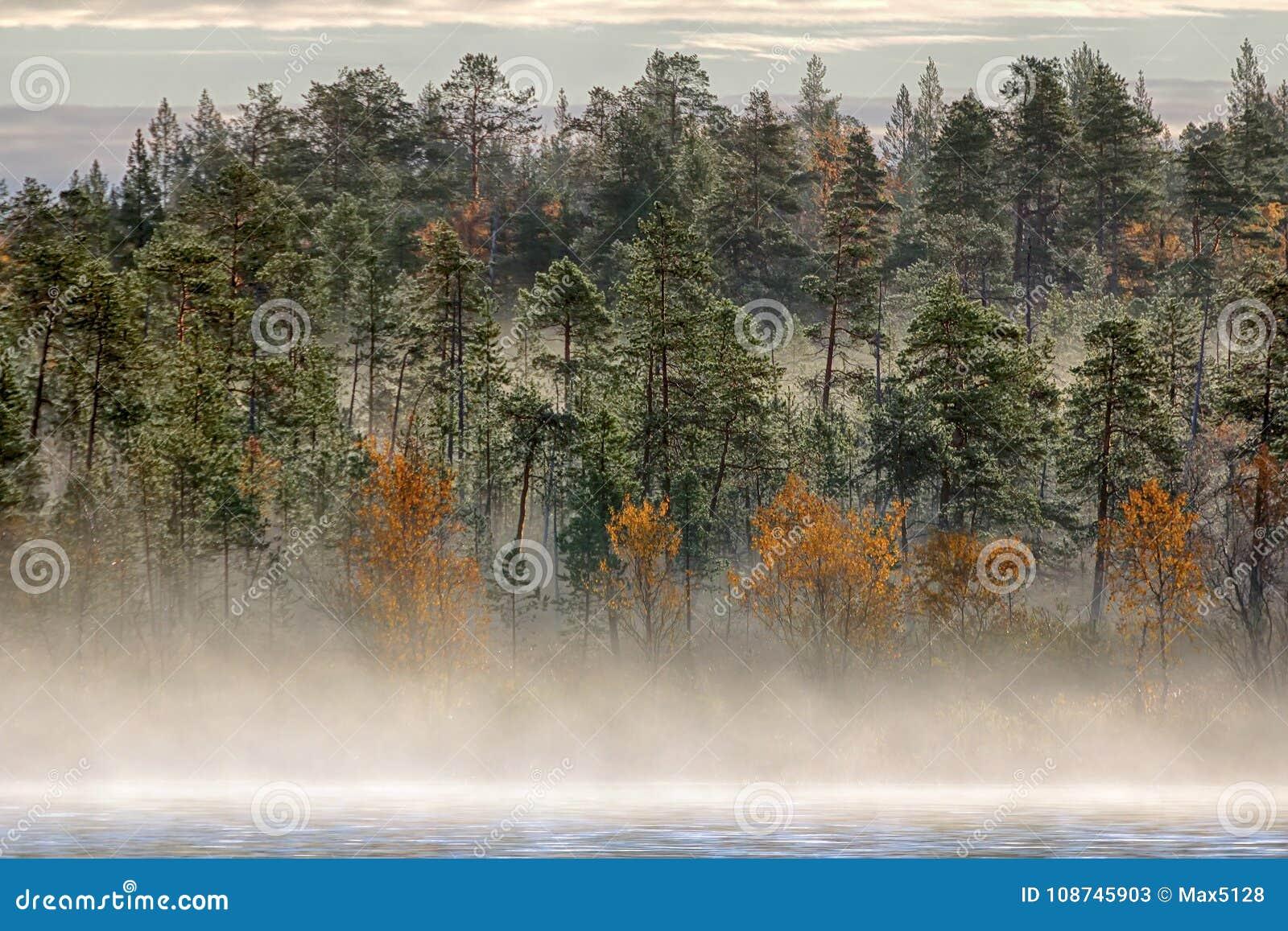 Paesaggio splendido di autunno con il fiume e la foresta nebbiosa