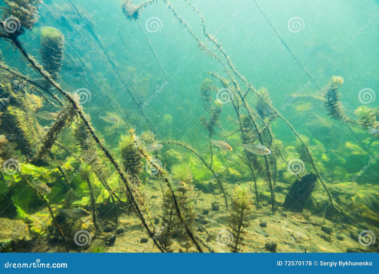 Paesaggio subacqueo del fiume con poco pesce