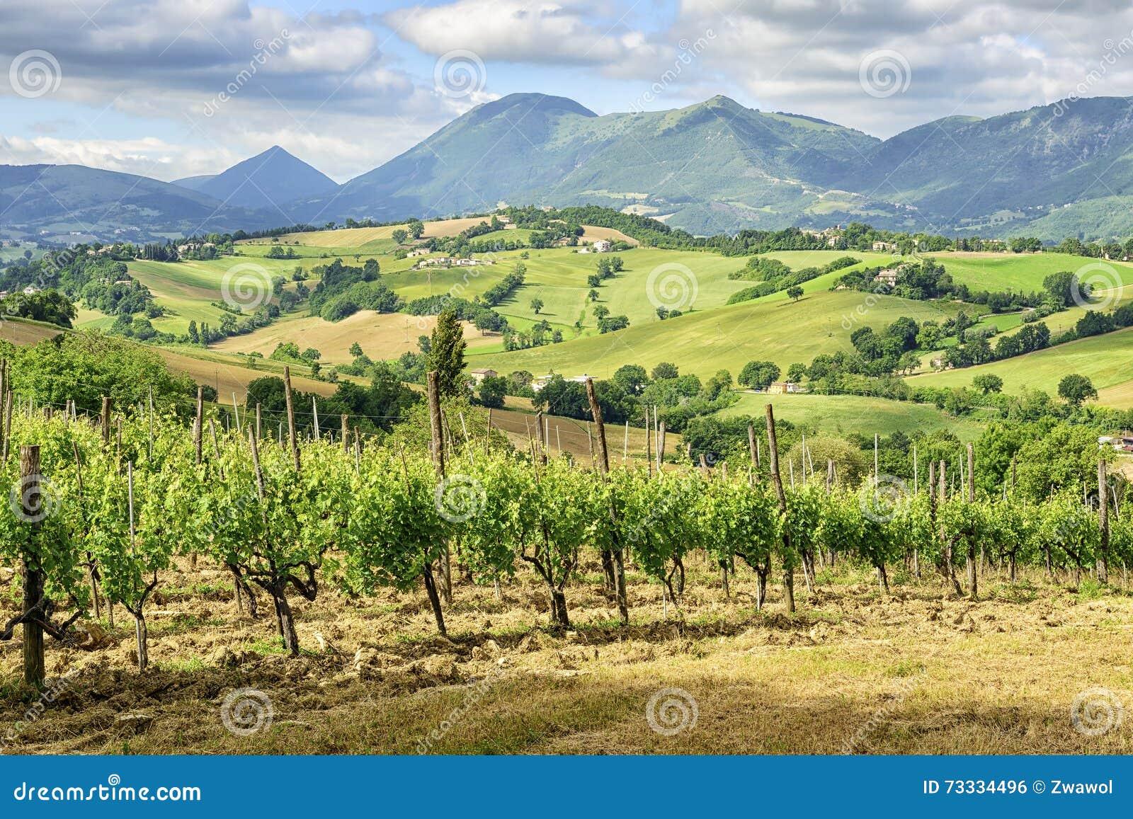 Paesaggio tipico Marche Italia