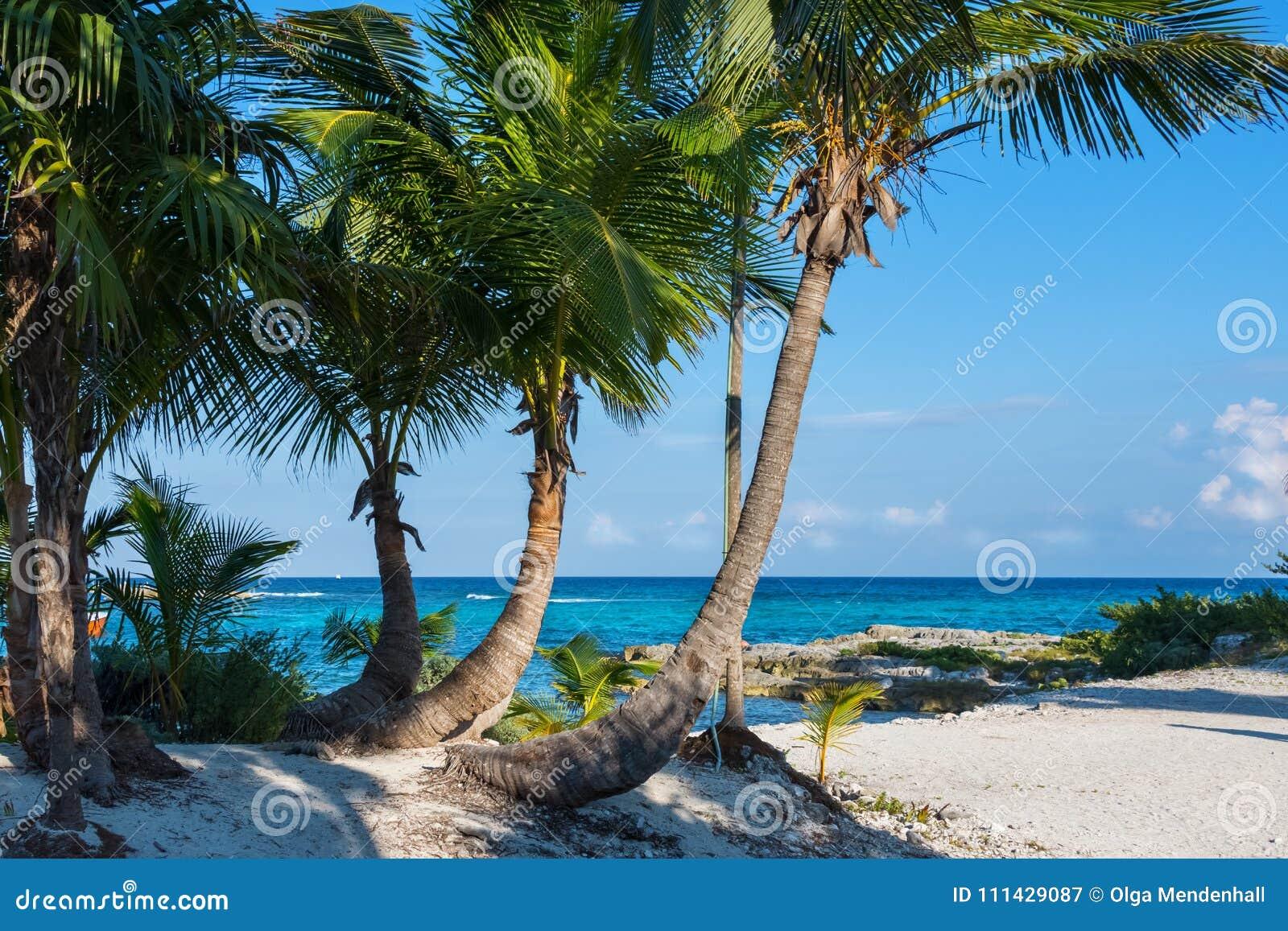 Paesaggio tropicale Bello mare tropicale del paesaggio, del cielo blu e del turchese nei precedenti