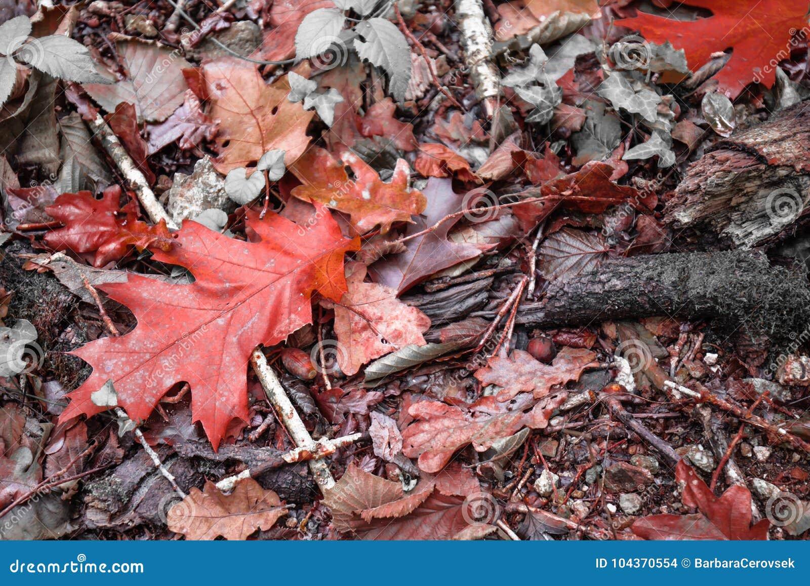 Paesaggio variopinto di autunno di caduta sulla terra - Caduta fogli di colore stampabili ...