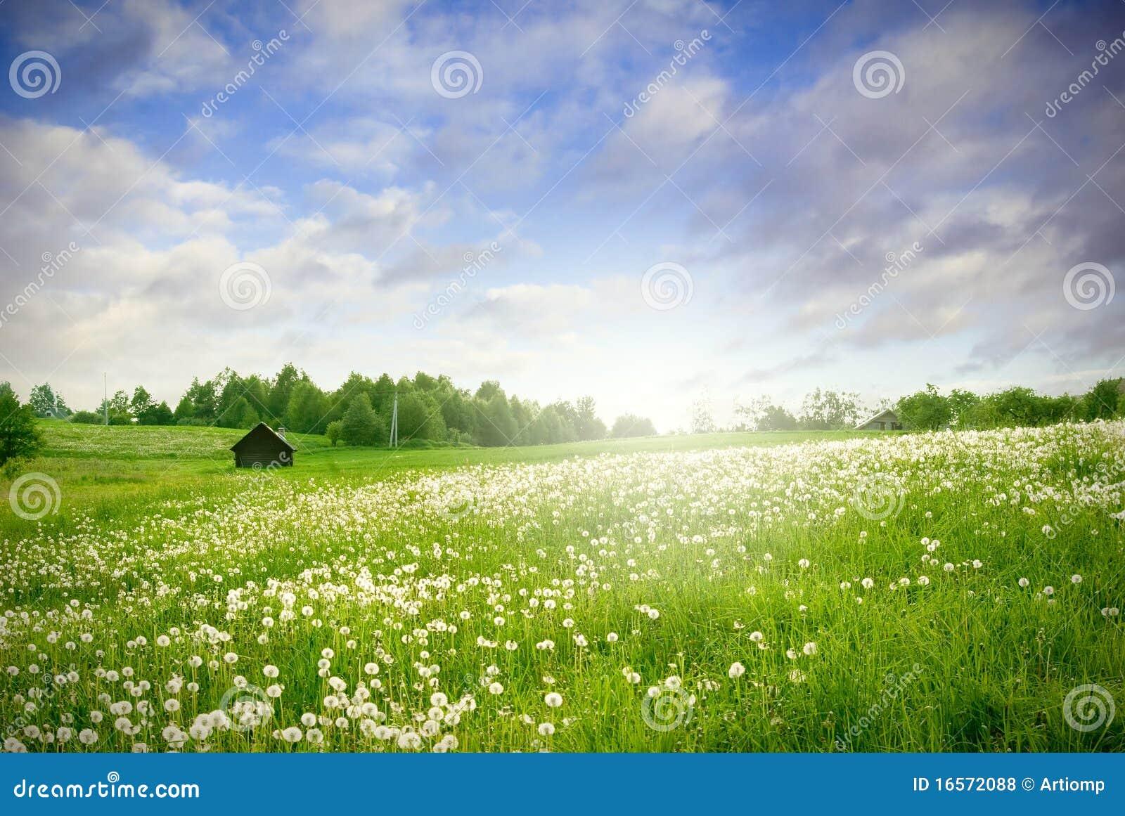 Paesaggio verde del campo
