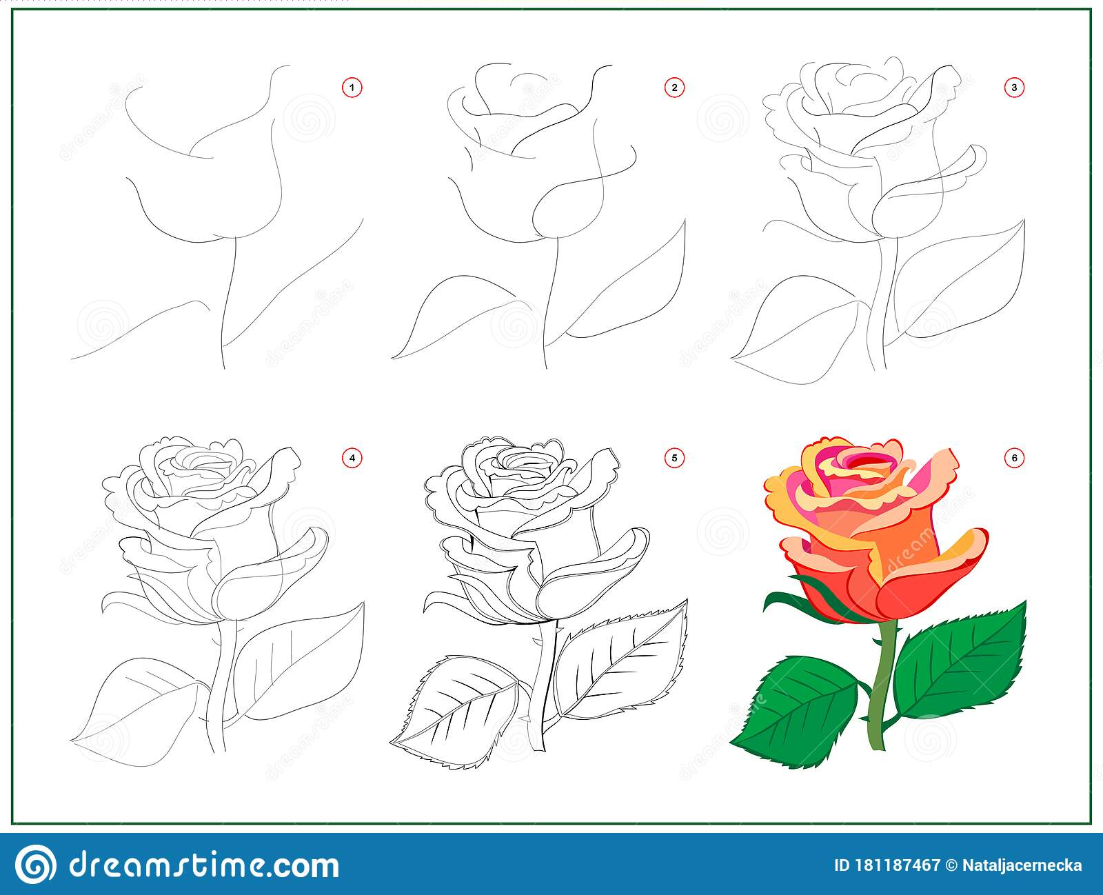Page Shows How To Learn To Draw Step By Step Beautiful Rose Flower Developing Children Skills For Drawing And Coloring Printable Stock Vector Illustration Of Sketch Printable 181187467