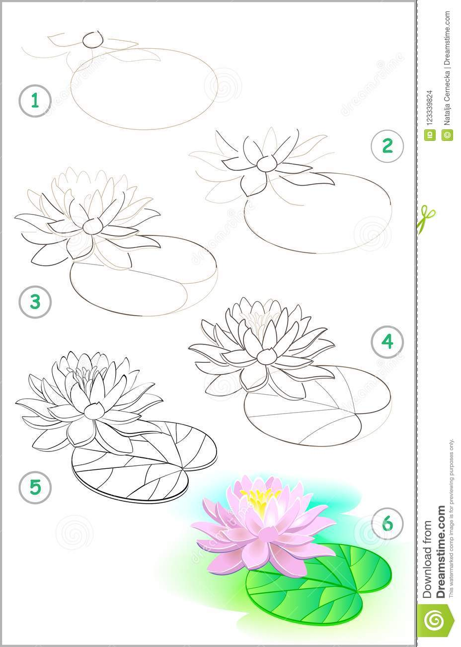 Page Shows How To Learn Step By Step To Draw A Water Lily Flower