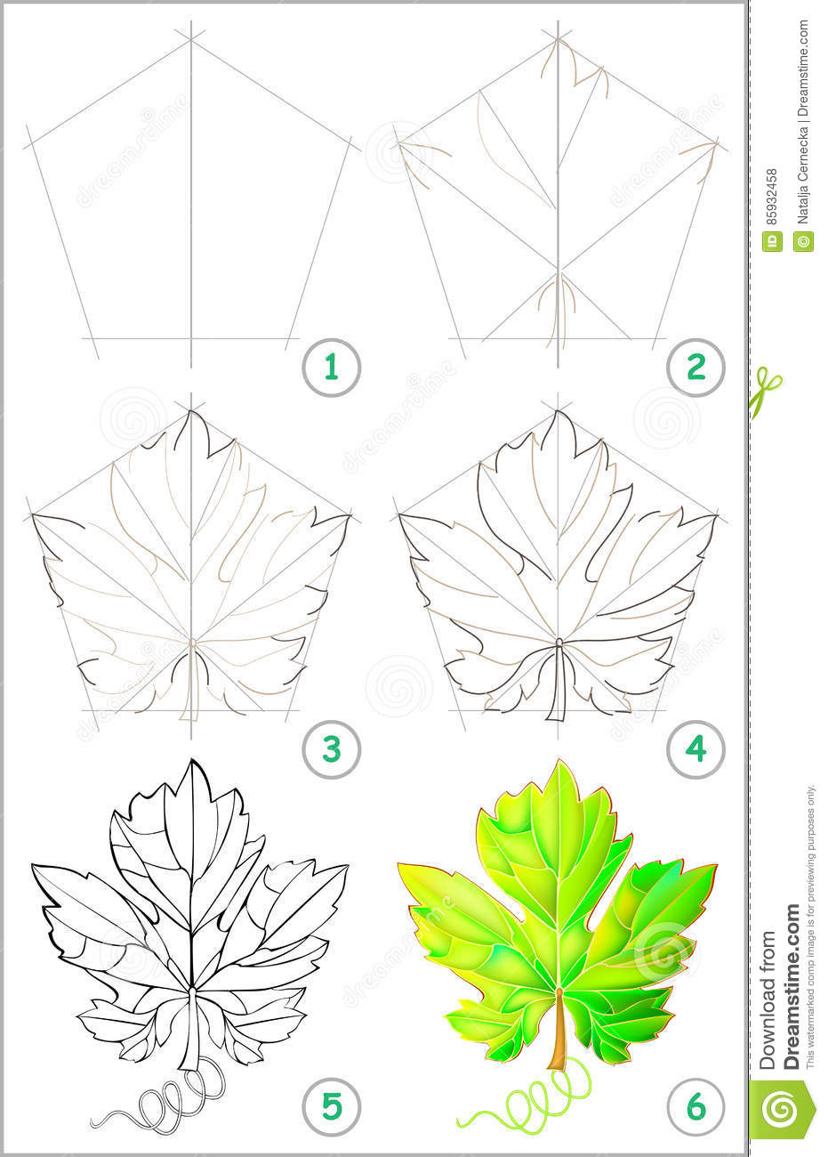 Uncategorized How To Draw A Leaf Step By Step page shows how to learn step by draw a grape leaf stock royalty free vector download leaf