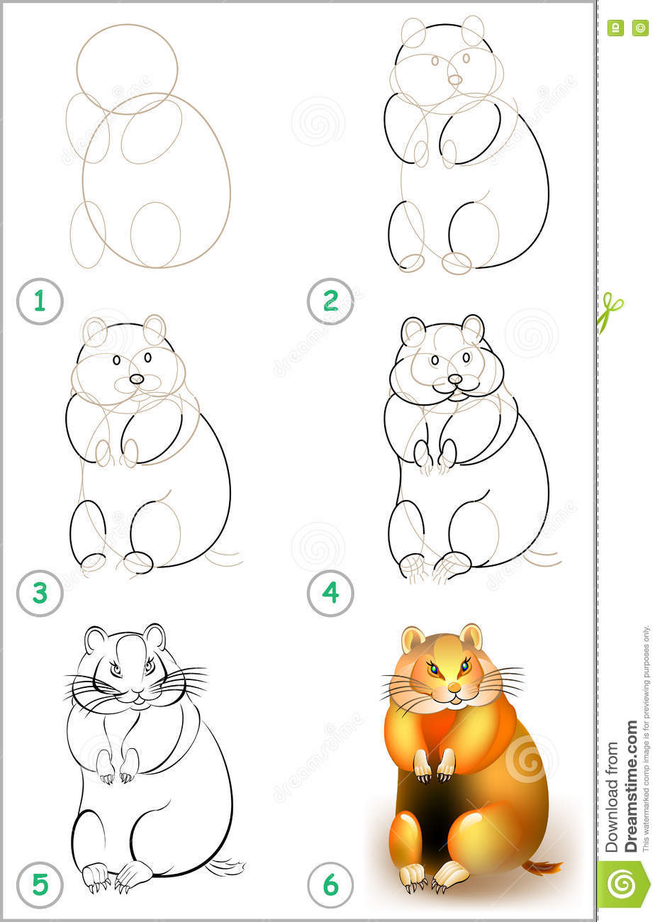 page shows how to learn step by step to draw a hamster stock vector
