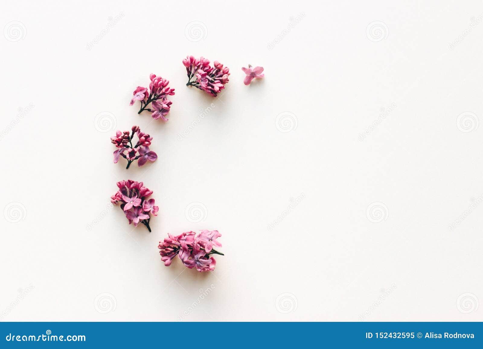 Pagina dei fiori lilla su fondo bianco