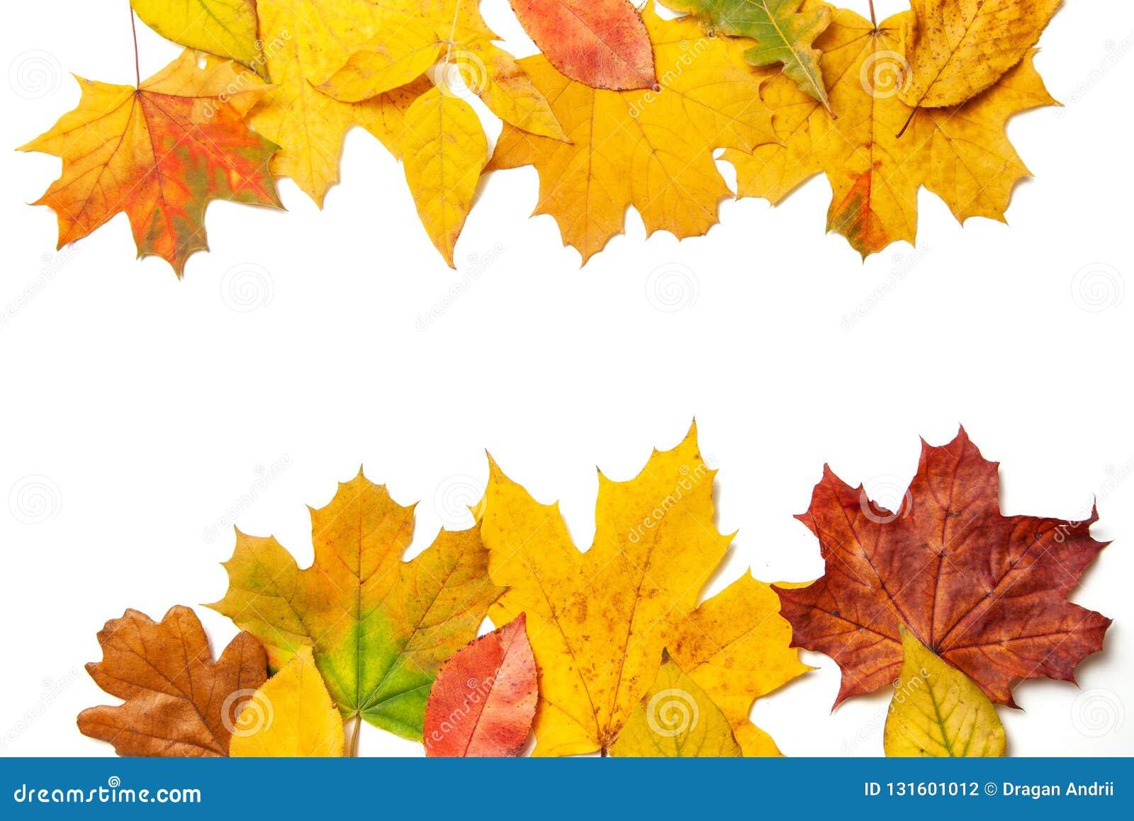 Pagina delle foglie gialle di autunno su fondo isolato bianco Cima di indice di concetto e lettere inferiori Modello