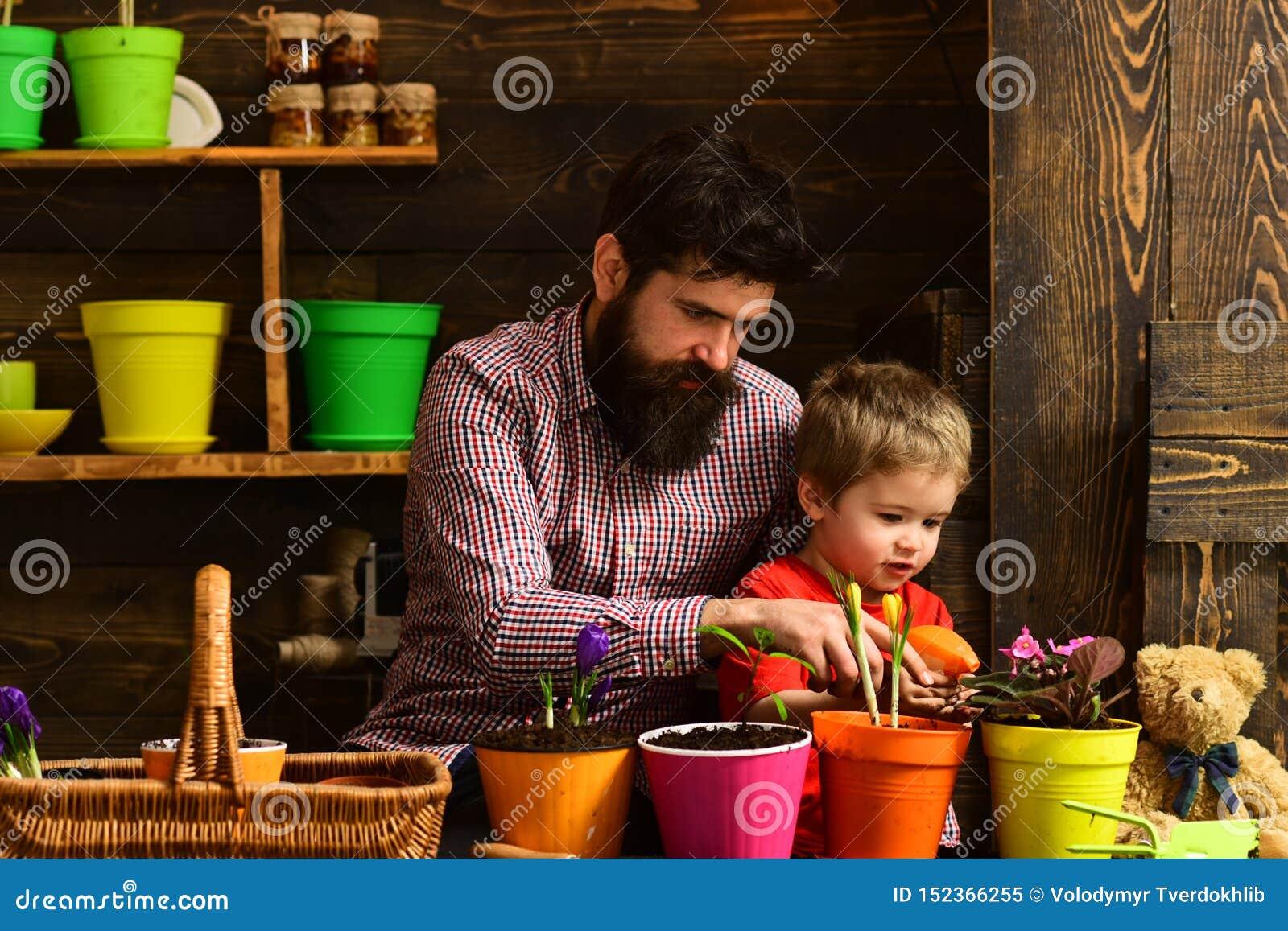Pai e filho Dia de pais Cuidado da flor Adubos do solo Dia da fam?lia estufa criança farpada do homem e do rapaz pequeno