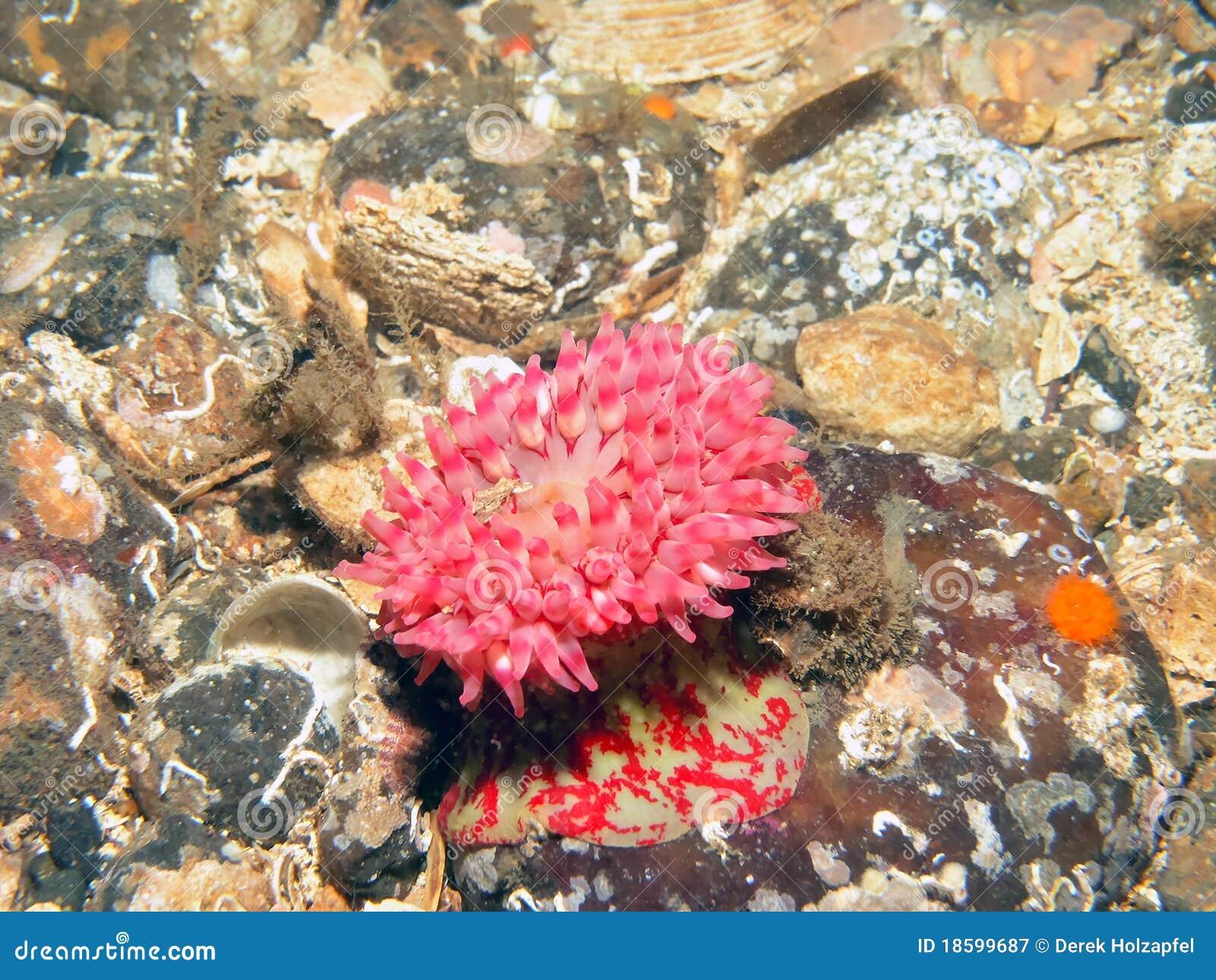 Painted Anemone On Ocean Floor Royalty Free Stock Photography - Ocean floor painting
