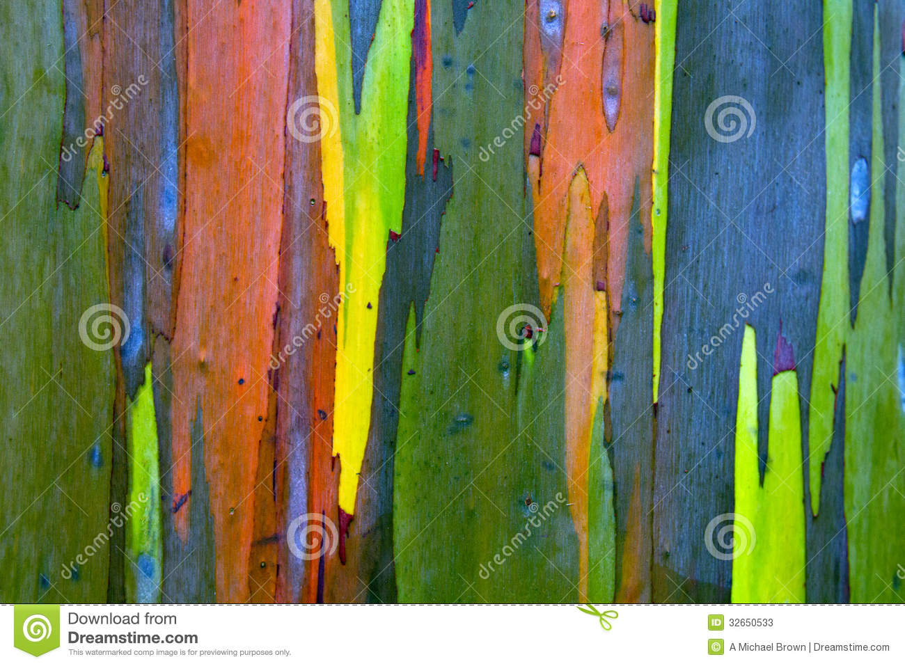 Rainbow Painted Eucalyptus (Gum) Tree Bark Background Stock Image ...