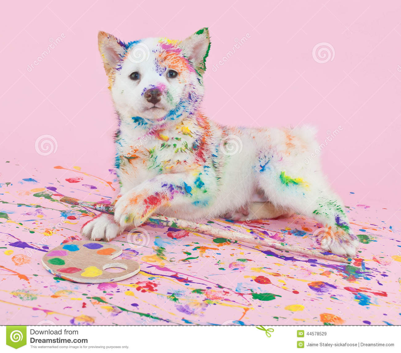 How To Make Dog Print Paint
