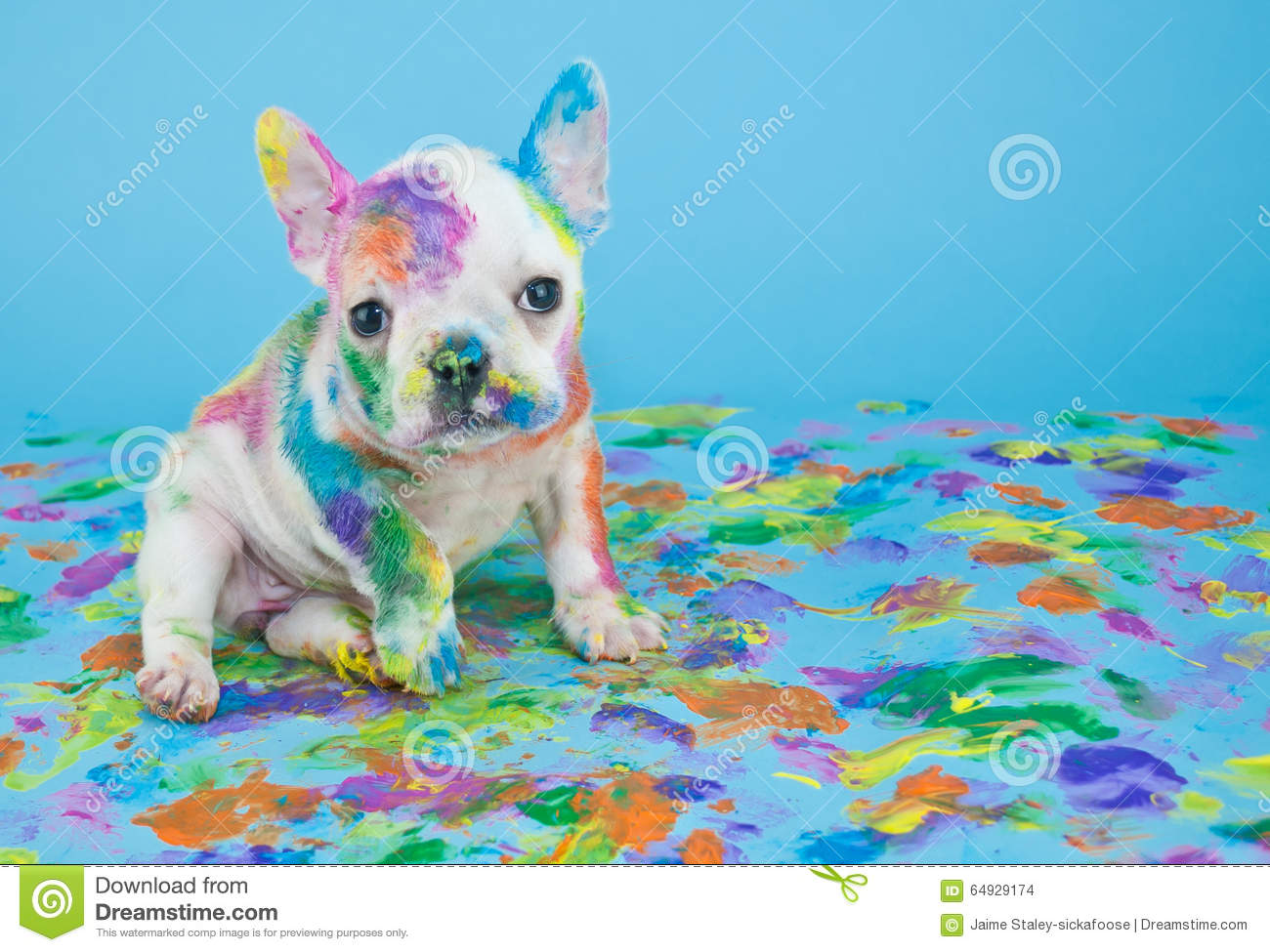 Painted Puppy stock photo Image of puppy canine image