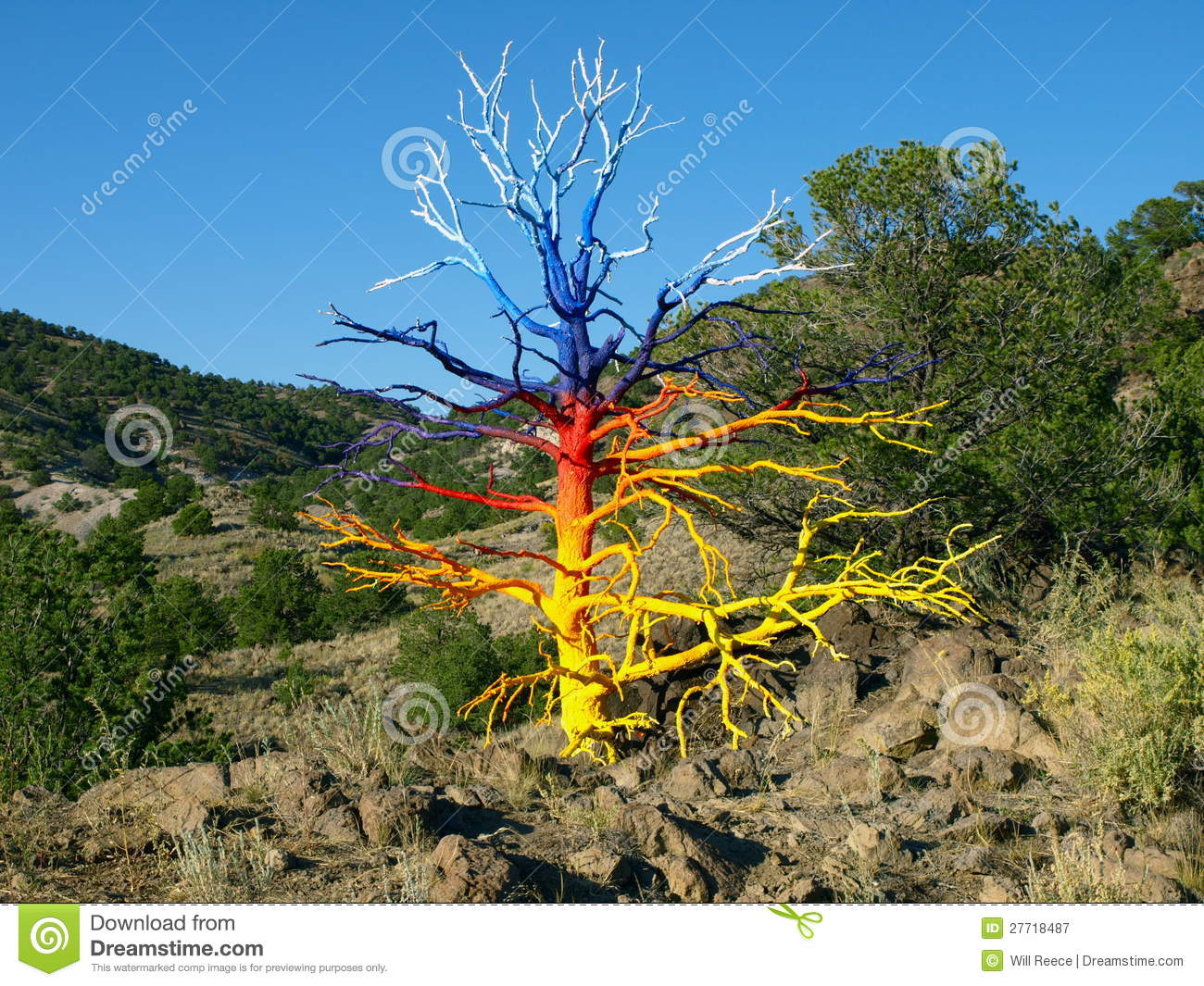 Painted Tree Royalty Free Stock Photography Image 27718487
