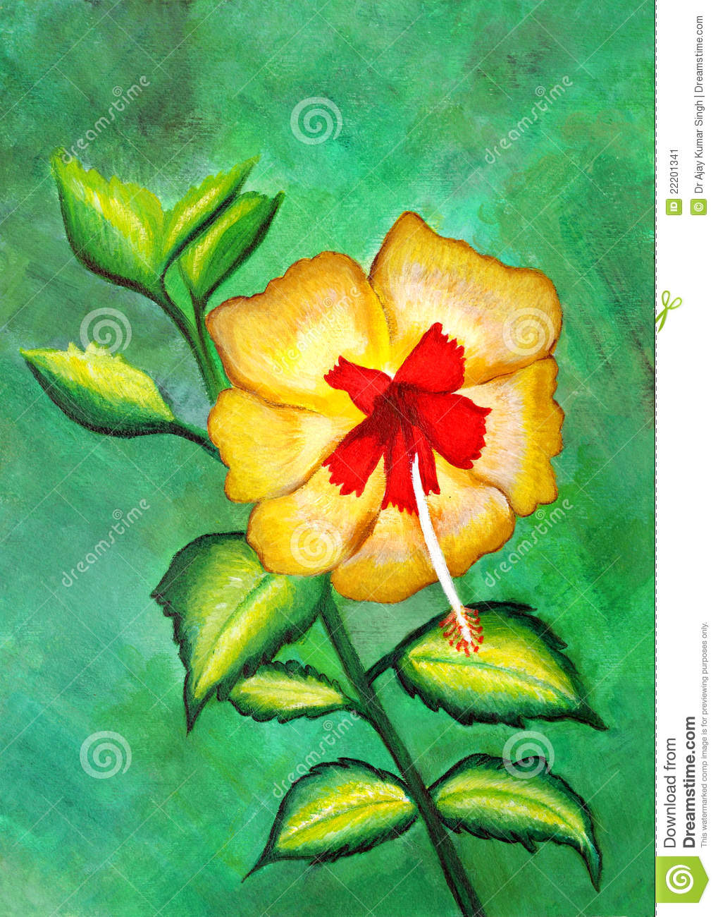 Hibiscus Are Very Beautiful With Yellow And Red 9