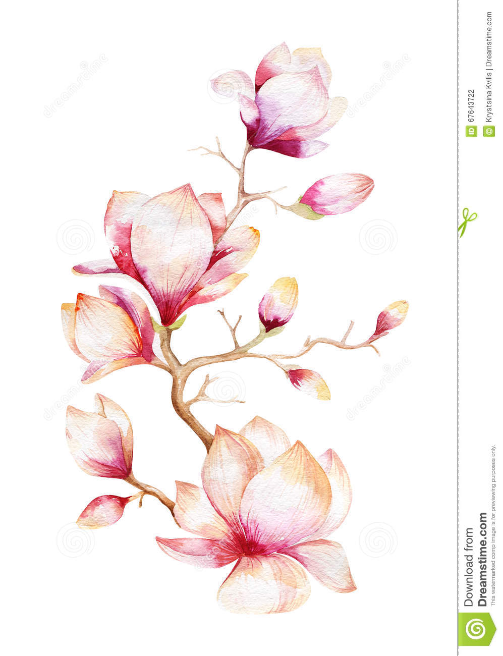 Painting Magnolia Flower Wallpaper Hand Drawn Watercolor Floral