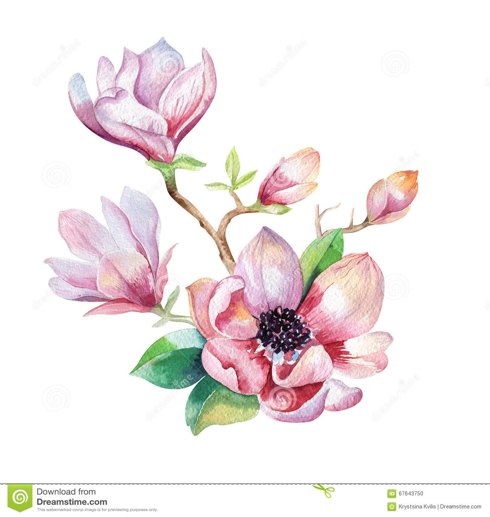 Painting Magnolia Flower Wallpaper. Hand Drawn Watercolor