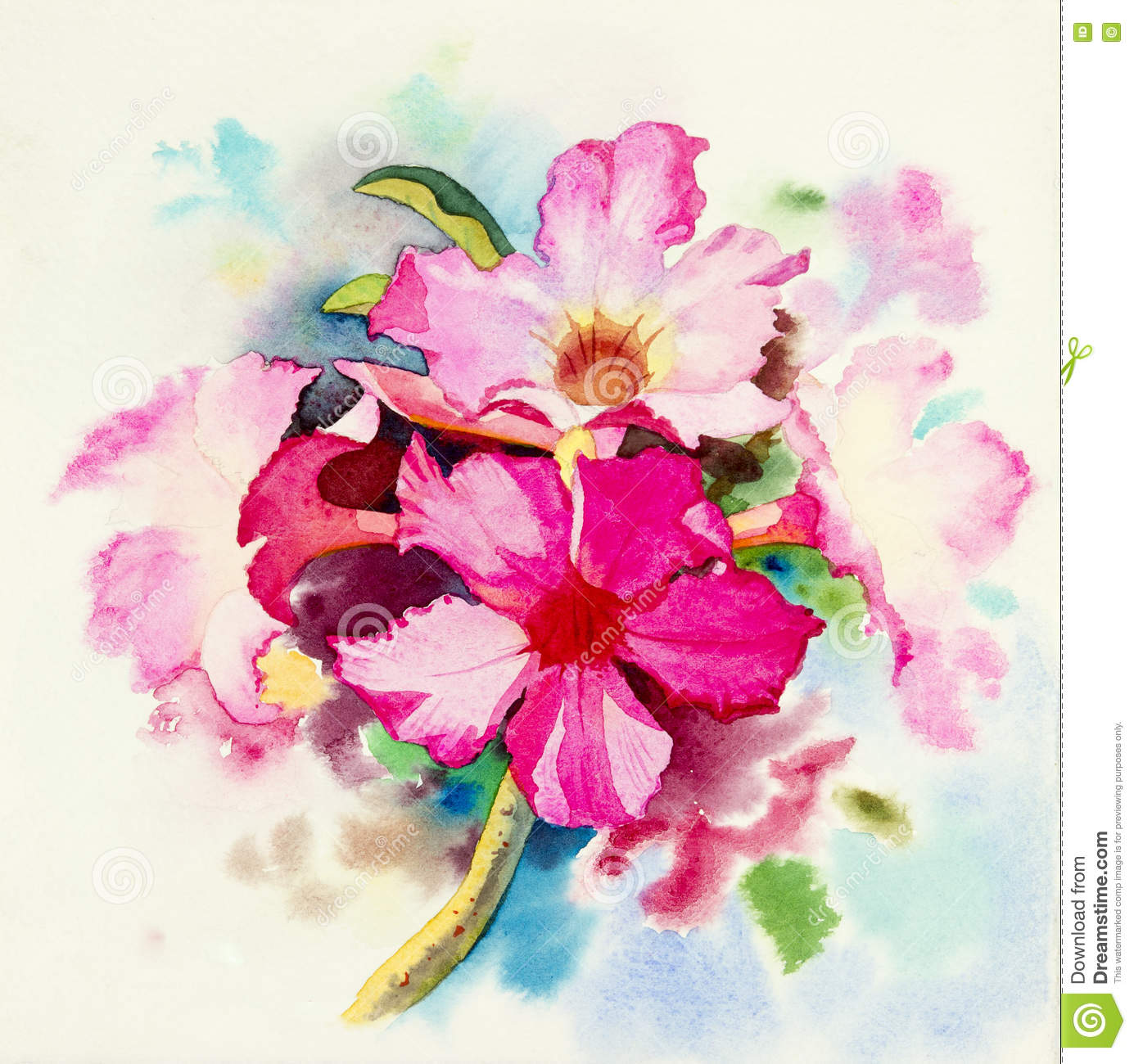 Painting Realistic Flower Pink Color Of Impala Lily Flower Stock