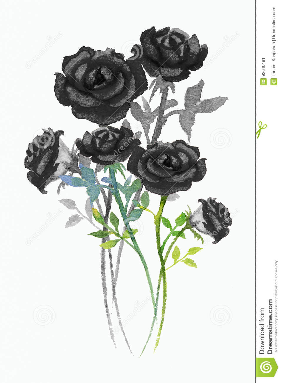 Painting Watercolor Black Flowers Of Roses Stock Illustration