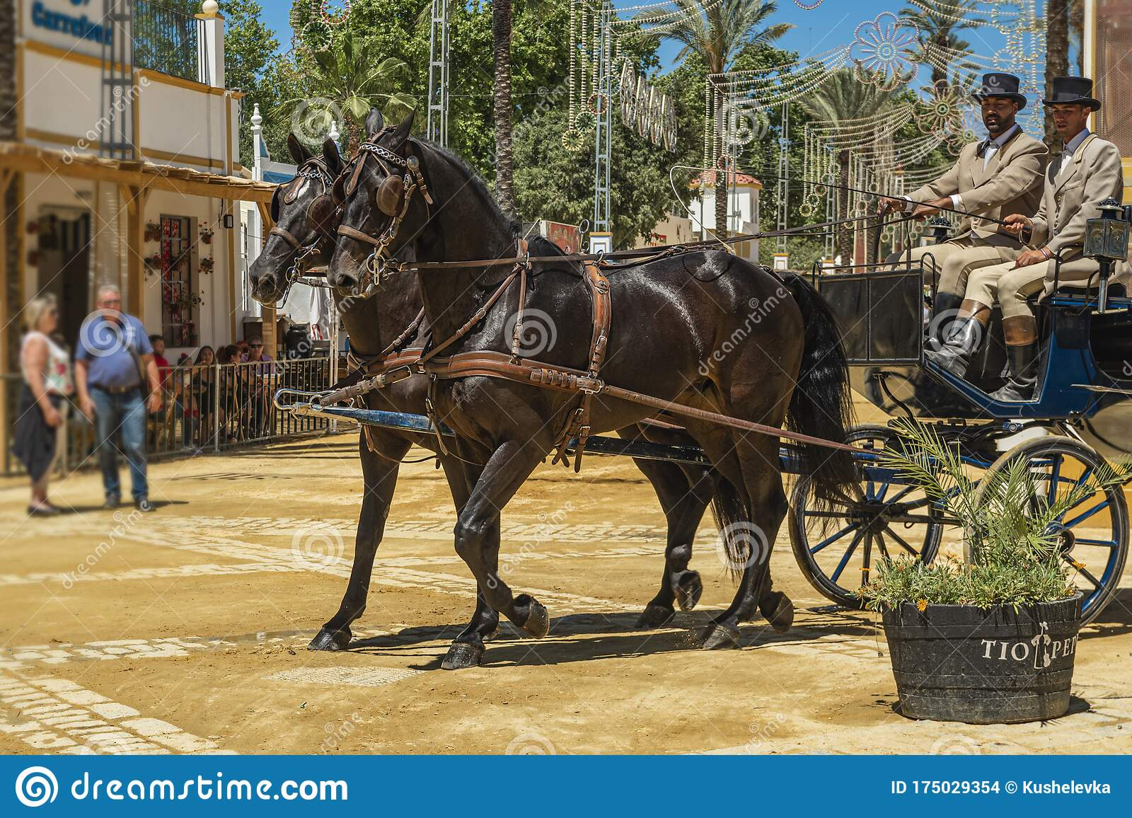 A Pair Of Dark Bay Horses Harnessed To A Carriage During A Horse Ferry Feria De Caballo In The City Of Jerez De La Frontera And Editorial Stock Image Image Of Caballo