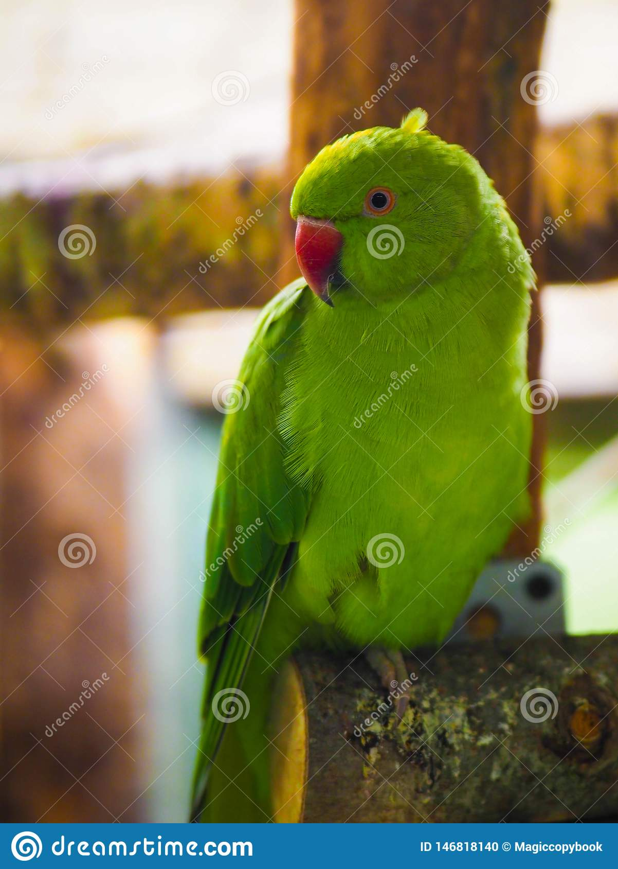 A pair of funny green parrot n