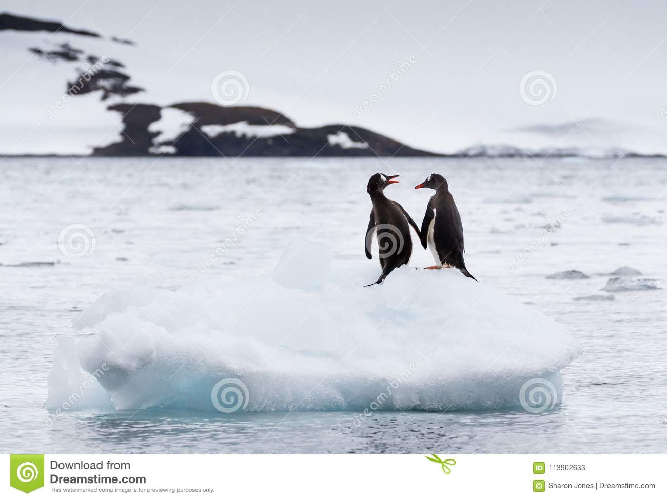 A pair of gentoo penguins Pygoscelis papua sitting on an iceberg with snow covered mountain in background, Antarctica