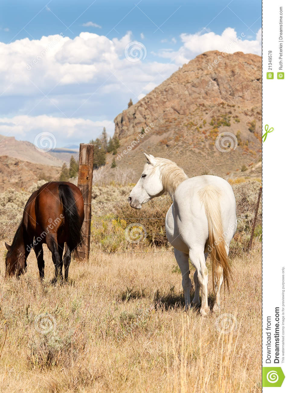 Pair Of Horses In Pasture Royalty Free Stock Photos