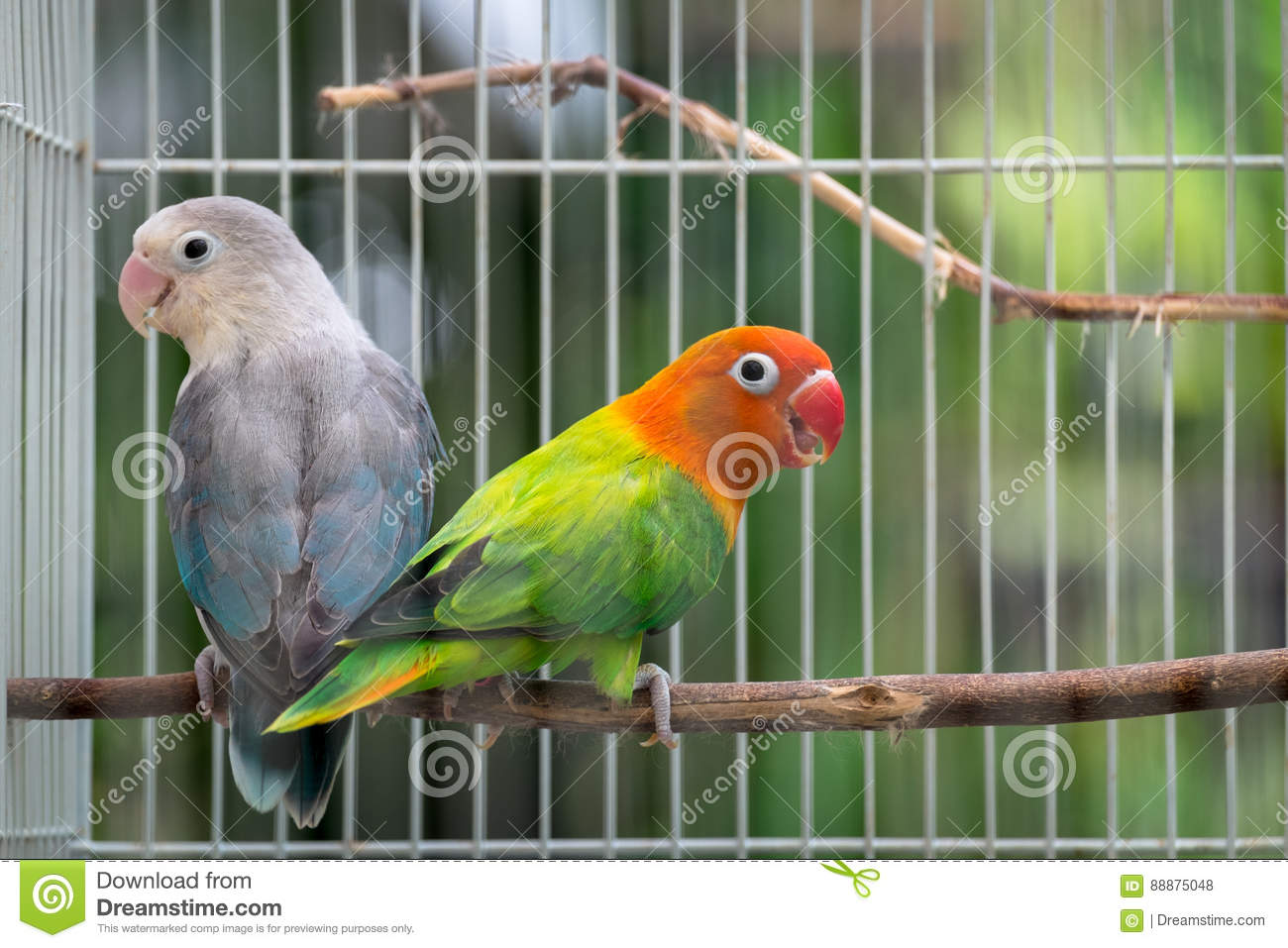 the couple in the cage