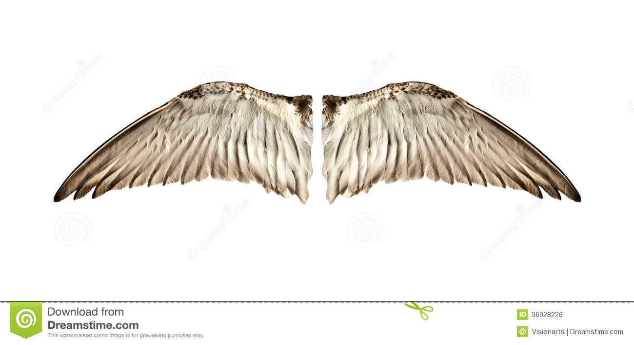 Pair Of Natural Bird Wings From Inside View Royalty Free Stock Image ...