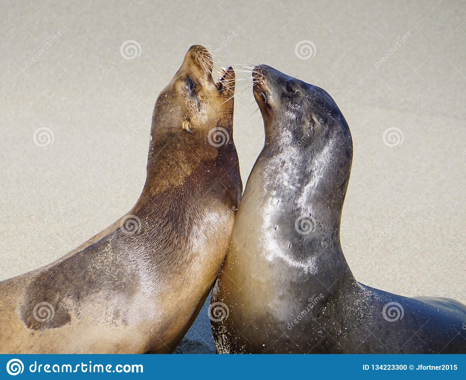 A Pair of Sea Lions
