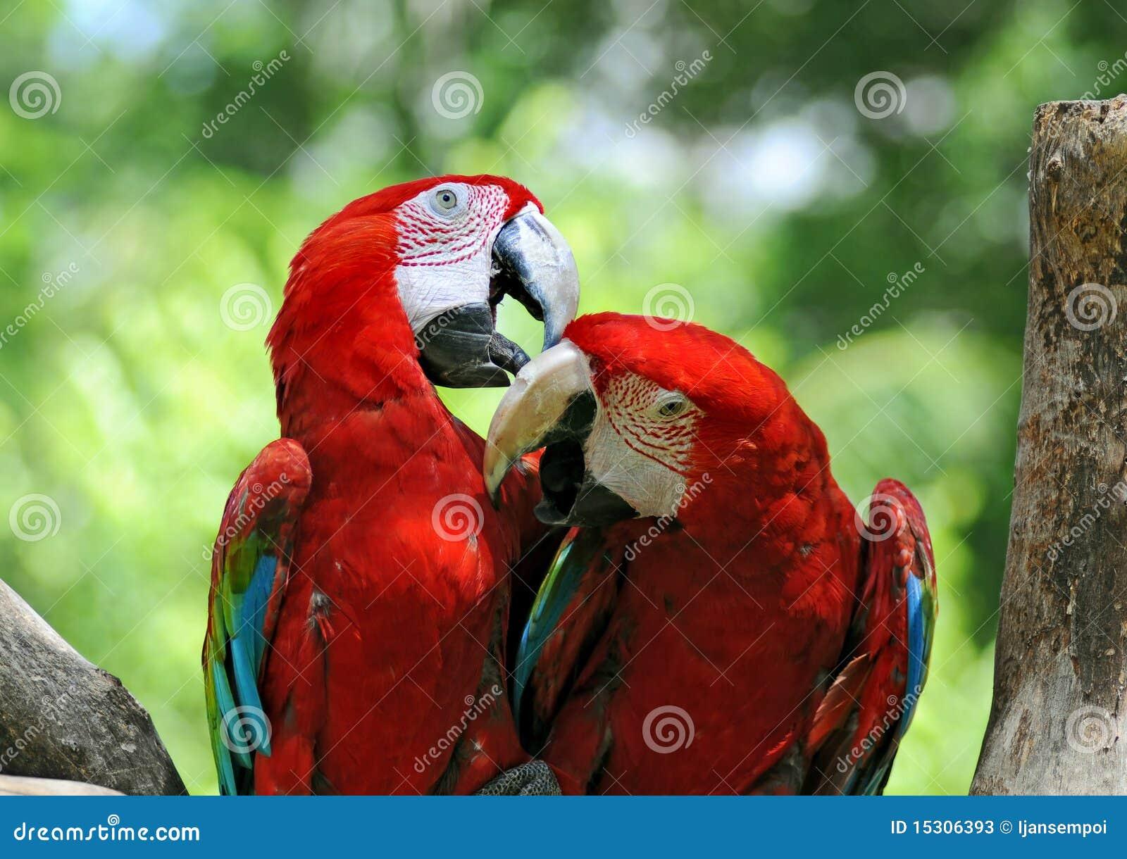 Paires de perroquets