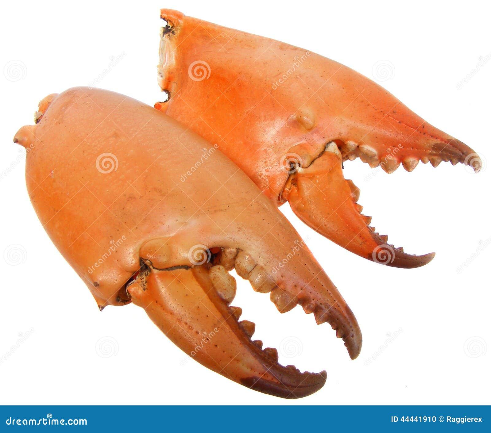 Résultats de recherche d'images pour «pinces de crabe»