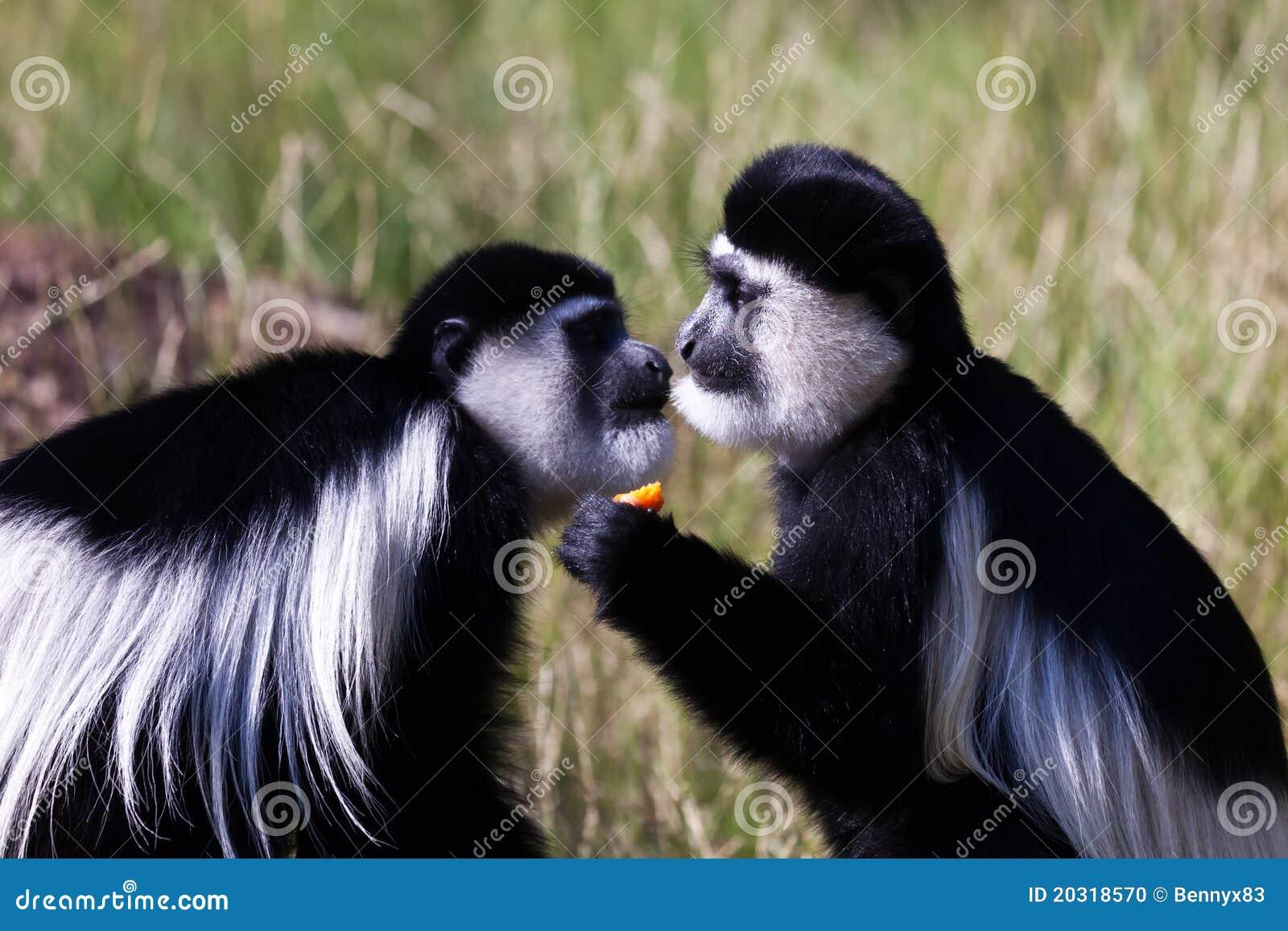 Paires de singes au zoo