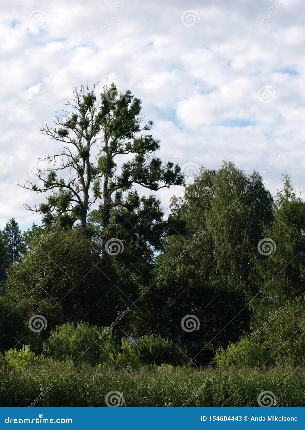 Paisagem bonita com lago calmo, reflexões do verão de árvores diferentes,