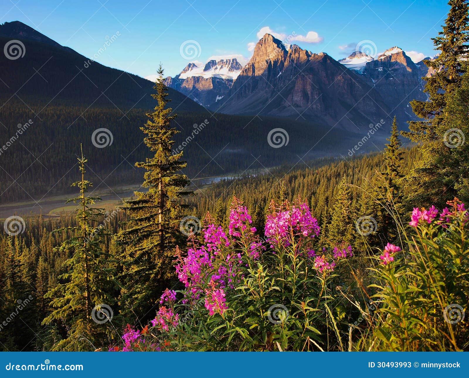 Paisagem bonita com Rocky Mountains no por do sol no parque nacional de Banff, Alberta, Canadá
