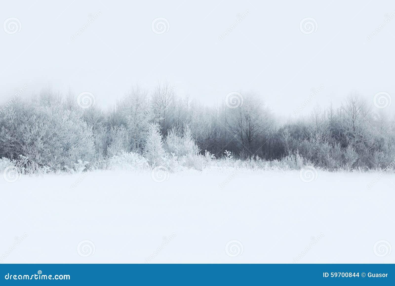 A paisagem bonita da floresta do inverno, árvores cobriu a neve
