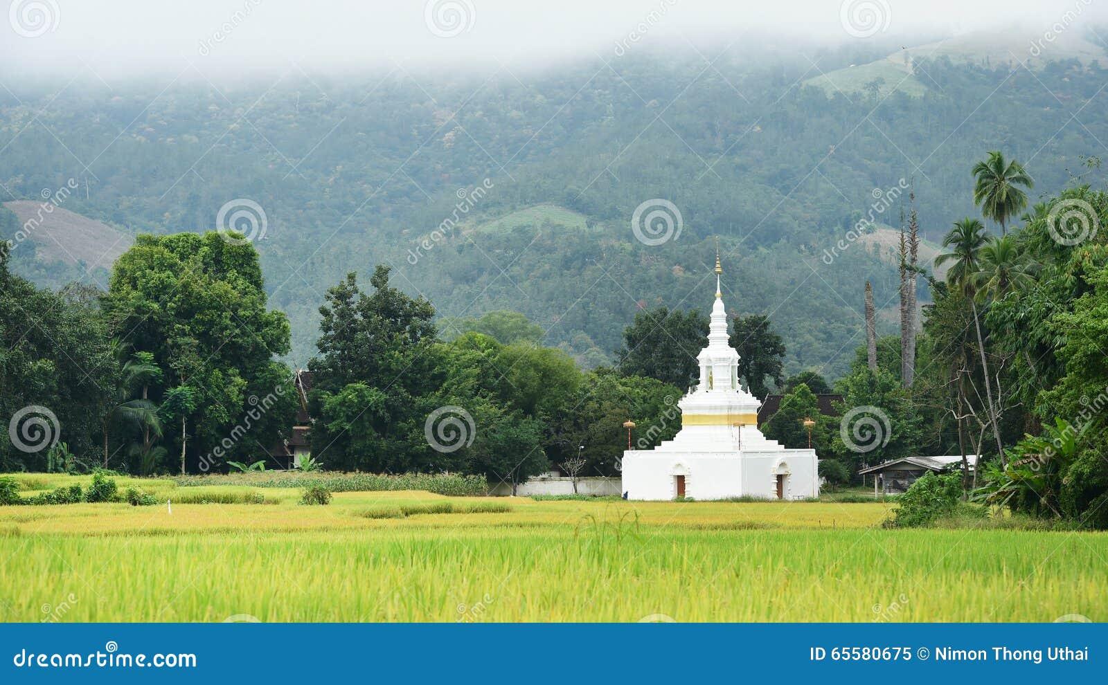 A paisagem bonita de campos do arroz