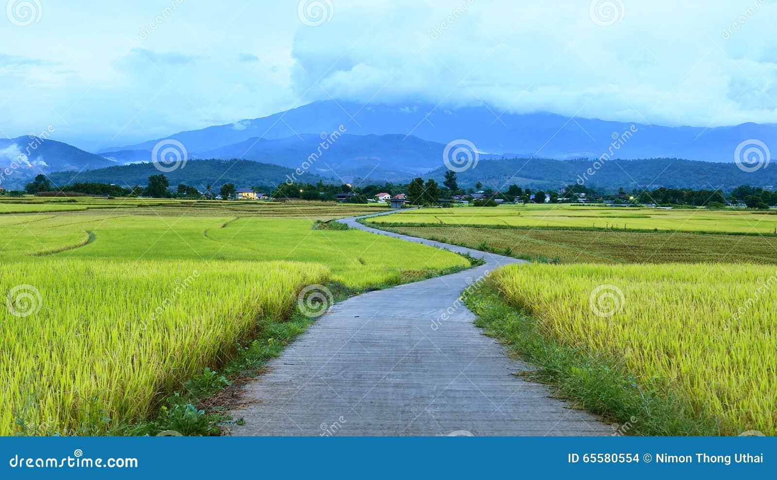 A paisagem bonita do arroz que a paisagem bonita do arroz coloca