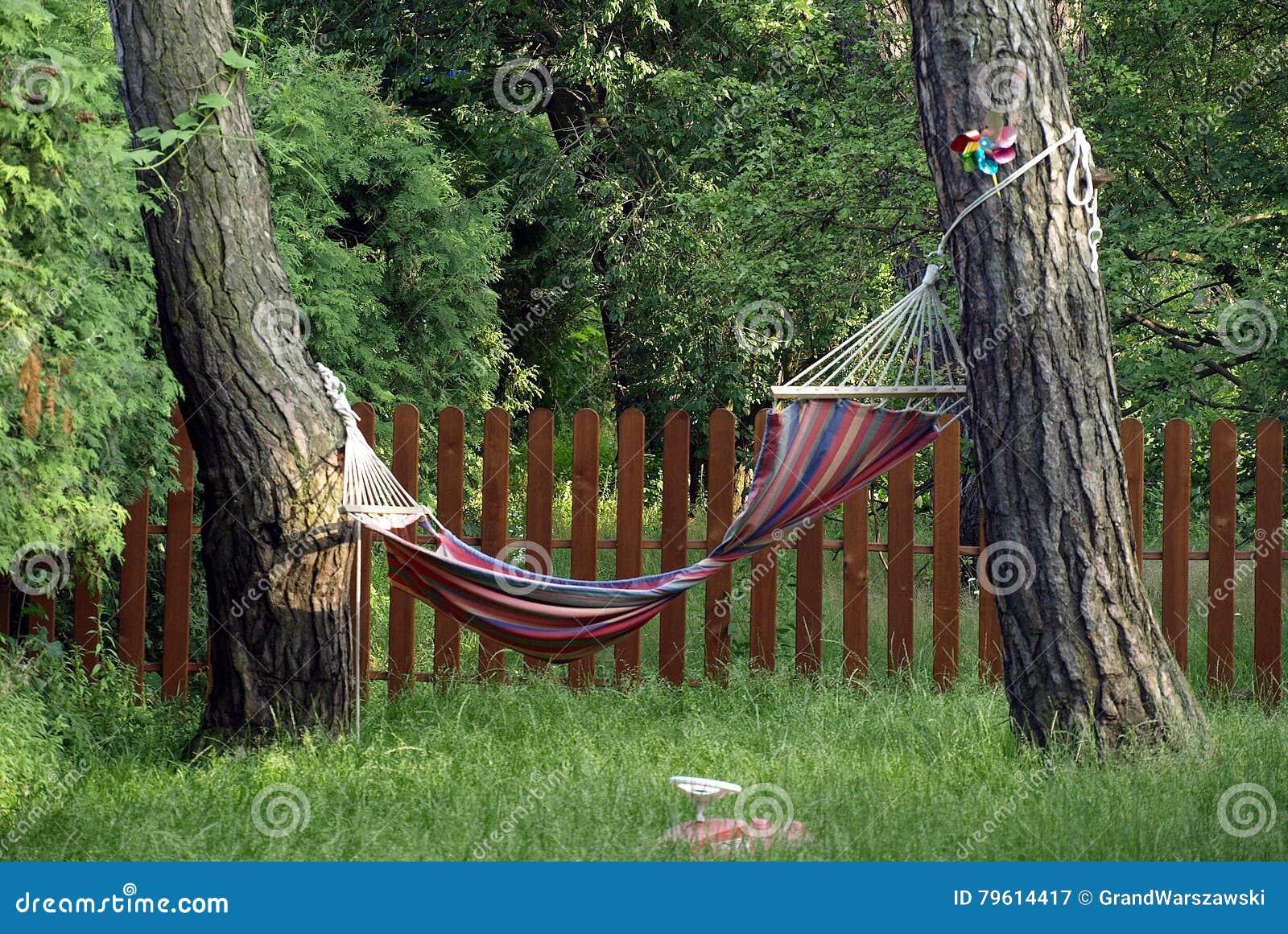 Paisagem bonita do verão com árvores e grama verde