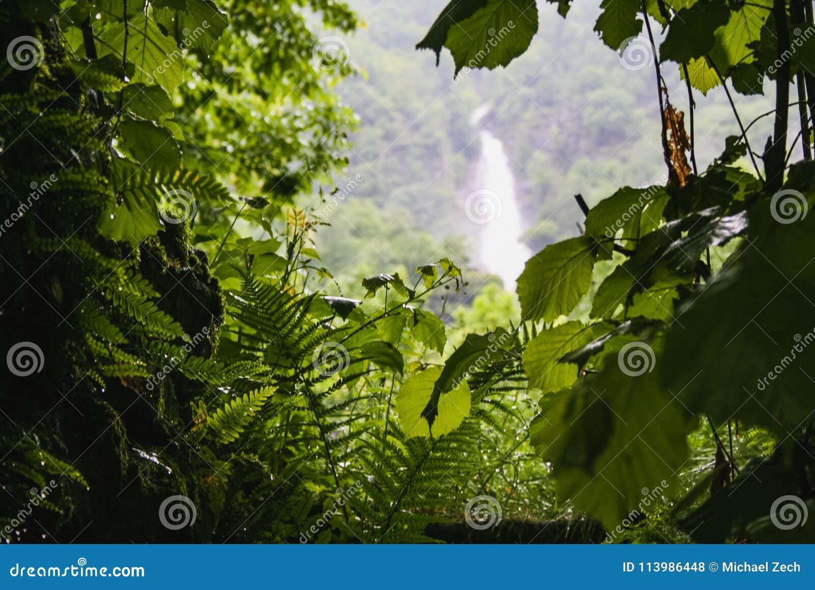 A paisagem bonita switzerland da natureza do maggia de valle