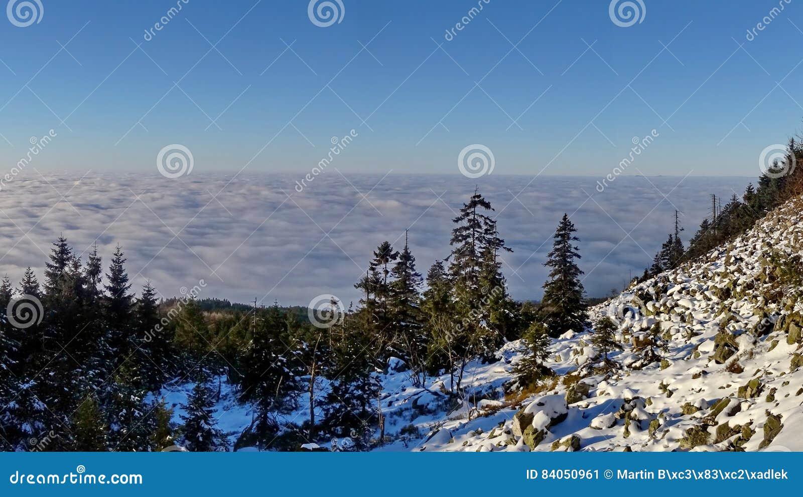 Paisagem colorida na floresta da montanha do inverno