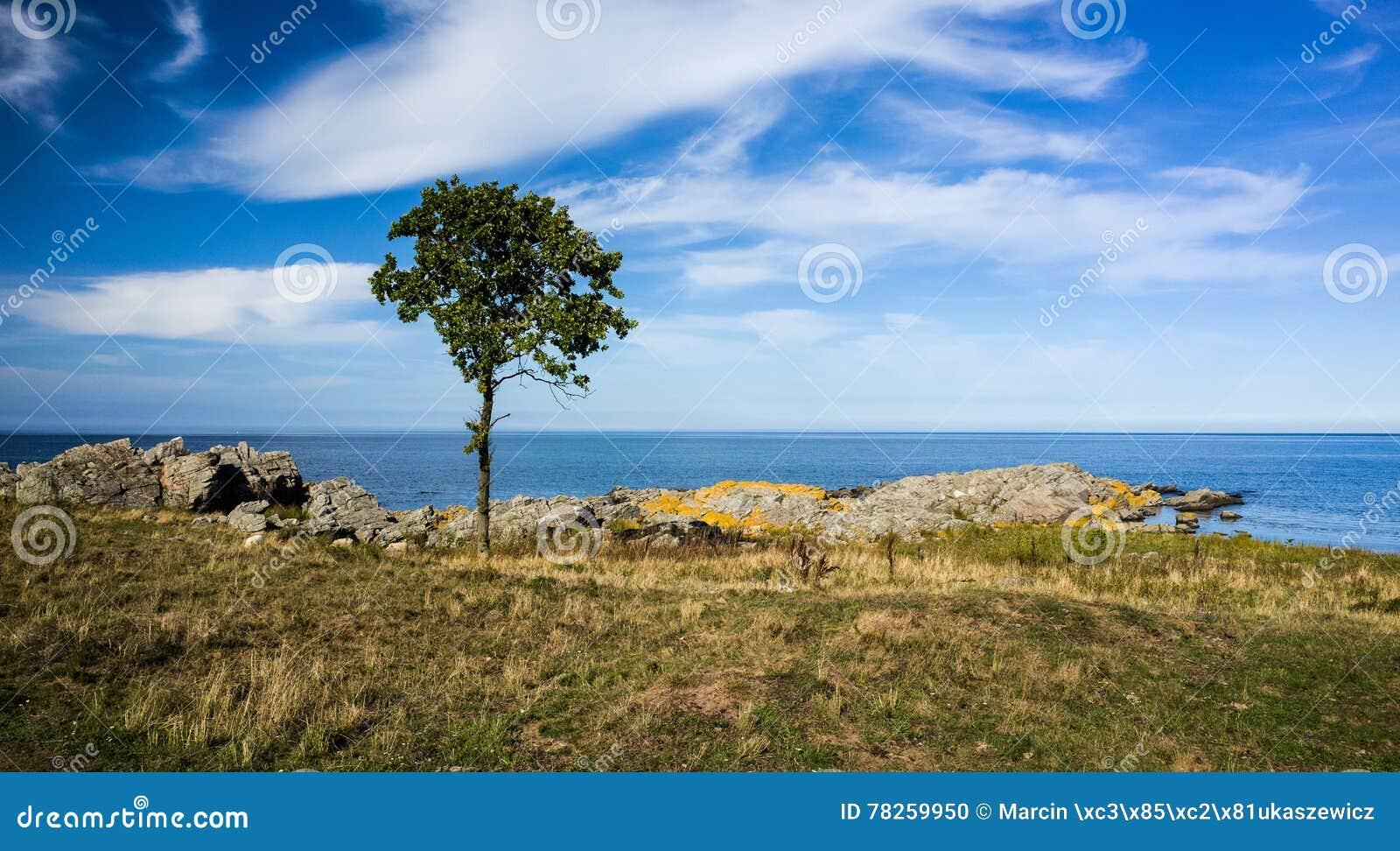 Paisagem com rochas, árvore e água