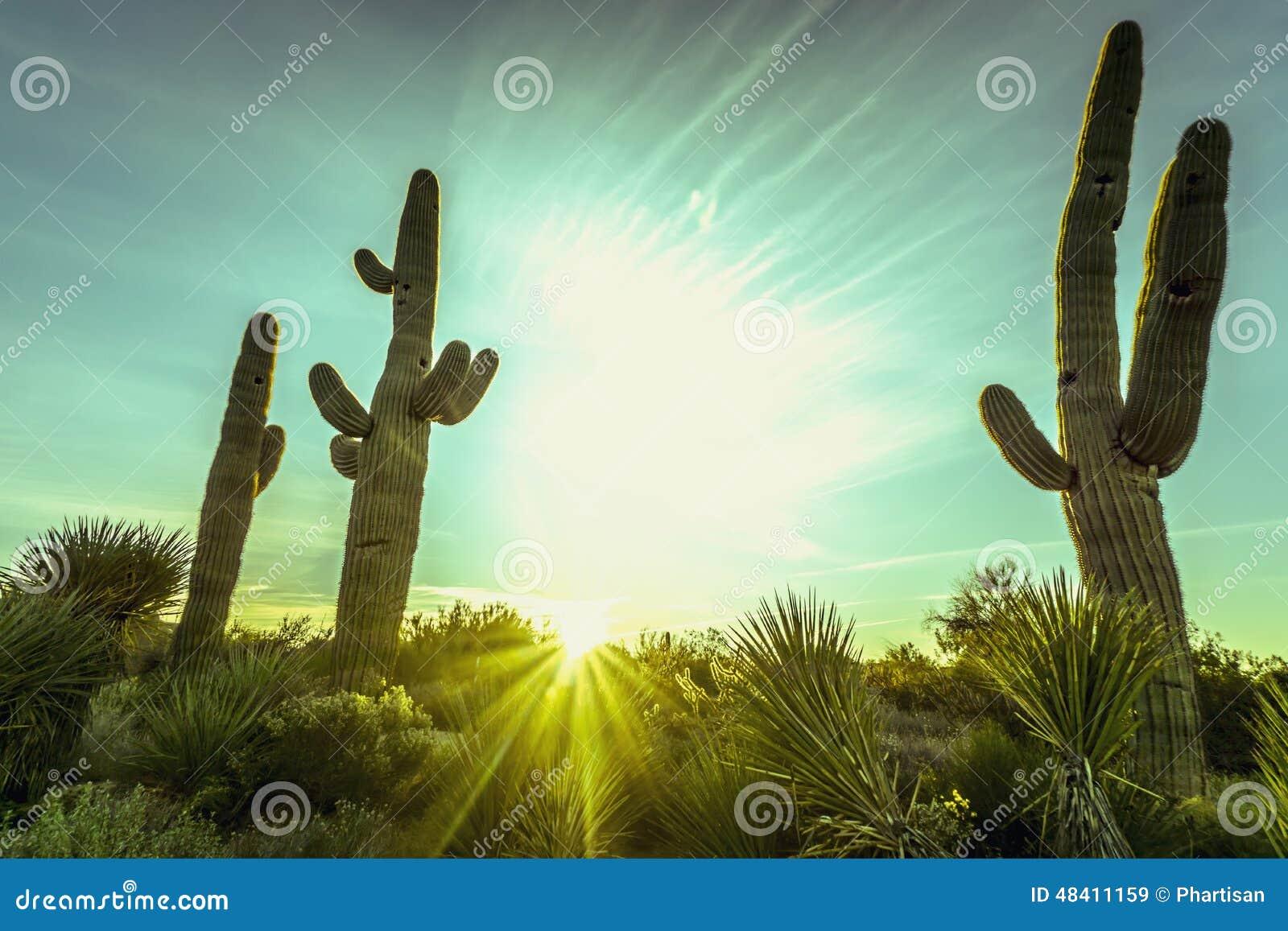 Paisagem da árvore do cacto do deserto do Arizona